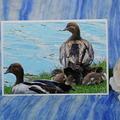 Duck Family on a Blank Card