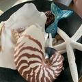 Pottery Mermaid Tail