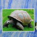 Tortoise Photo on Blank Card
