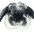 A4 Custom Colour Pencil Pet Portrait