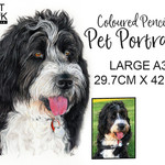 A3 Custom Colour Pencil Pet Portrait