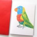4 Blank Cards, Rainbow Lorikeet, Birthday Card, Thank You Card, Christmas Card