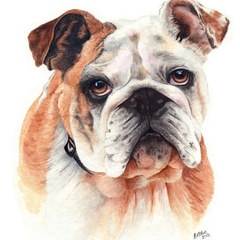 Custom Watercolour Pet Portrait 16 x 20 | Personalised Gift | Animal Art