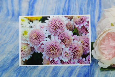 Small Pink Chrysanthemums Photo on Blank Card