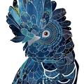 Black cockatoo Print A4