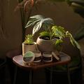 Green Tea & Basil Medium Candle Tin