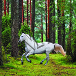 White Horse in Forest poster A4 Size