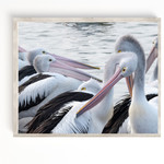 Australian Pelican Fine Art Print, The Entrance Pelicans, Central Coast