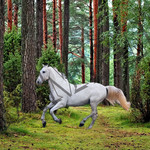 006 White Horse in Forest poster A3 Size
