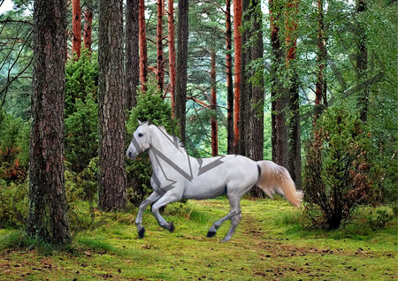 006 White Horse in Forest poster A4 Size