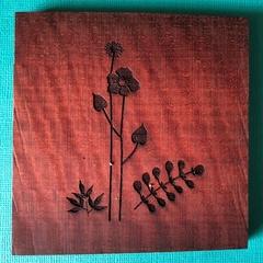 Engraved Redgum Coasters - Flower 3