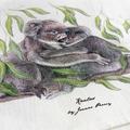 Koalas Tea Towel, Australian wildlife illustration, Mother and child cuddle