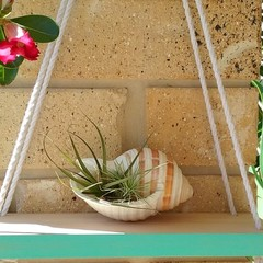 Mint Reversible Hanging Display Shelf