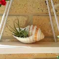White Reversible Hanging Display Shelf