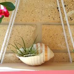 Pink Reversible Hanging Display Shelf