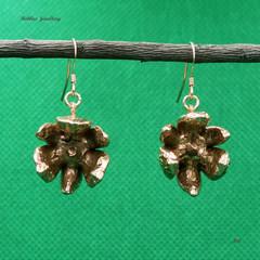 Real callitris (native pine) cone earrings
