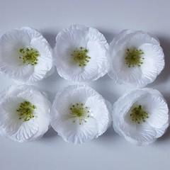 Ivory Petal Wild Rose Flowers