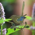 Brass & Resin Fairy Wren Garden Decoration