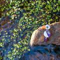Red-Billed Hornbill Earrings - Polymer Clay Statement Earrings