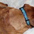 Prussian Blue Dog Collar