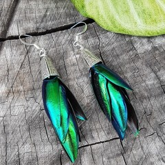 Elytra Silver Earrings - REAL Thai Jewel Beetle wings