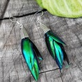 Elytra Earrings - REAL Thai Jewel Beetle wings in your choice of silver or brass