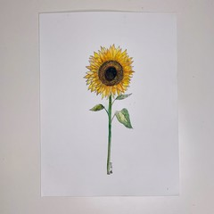 Watercolour Painting - Sunflower ORIGINAL