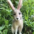 Needle felted Rabbit, Felt Brown Hare, OOAK rabbit sculpture, needle felted bunn