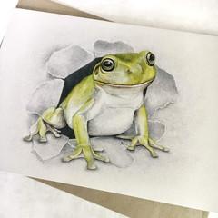 Green Tree Frog - Australian Wildlife art greeting card - waterways conservation