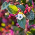 Large Bird Studs - Custom Polymer Clay Statement Earrings - Choose Your Birds!