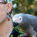 African Grey Parrot Earrings - Polymer Clay Statement Earrings
