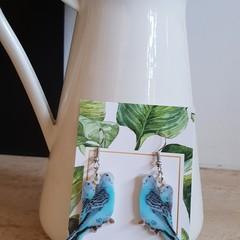 Blue Parakeet earrings - Australiana