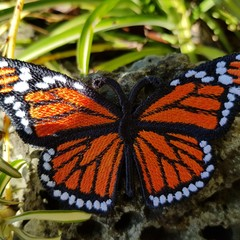 Free Standing Monarch Butterfly Badge/Patch