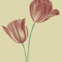 tulips (instant download)