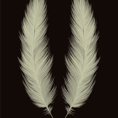feathers (instant download image)