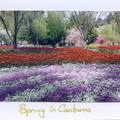 5  PHOTOGRAPHIC CARDS OF CANBERRA - Handmade
