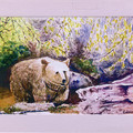 ANIMAL ART CARDS featuring art by Ian Holland - Pack of 6 plus 1 free card