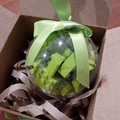 Lime Green Brick-filled Clear Decoration