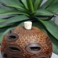 Kokedama + Banksia Aroma Pod Gift Bundle