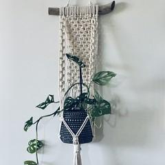 Macrame/driftwood planthanger