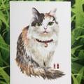 Original picture postcard - Cat003