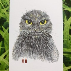Original picture postcard - Earless blackcat