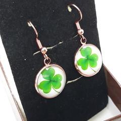 St Patrick's Day Lucky Clover