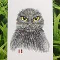 Original picture postcard - Earless blackcat