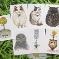 Postcard Set Pack - Cats