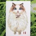 Original picture postcard - Catball01