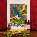 Australian Birds - Superb Fairy-Wren Edition 2/5 - Linoprint and Watercolour