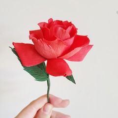 Red garden rose || Valentine's Day, red rose, crepe paper.