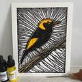 Australian Birds - Regent Bowerbird Edition 4/5 -  Linoprint - Watercolour