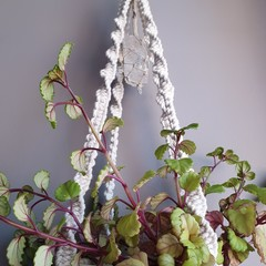 Clear Quartz Crystal Shortie Macrame Plant Hanger